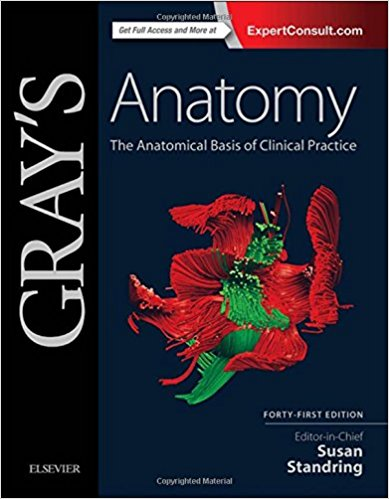 51FIvINn2cL. SX387 BO1204203200  - Gray's Anatomy-The Anatomical Basis of Clinical Practice 41st Edition PDF Free Download